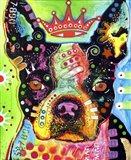 Boston Terrier Crowned