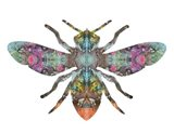 Transverse Bee