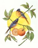 Oranges and Orioles