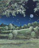 Fireflies Meadow