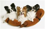 Puppy Trio Cuddle