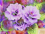 Primula Lilac Fantasy