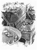 Rustic Display Of Tomatoes For Sale Black And White