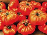 Rustic Tomatoes
