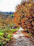 Walnut Avenue In Autumn Umbria