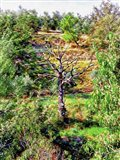 A Dead Tree Dominates