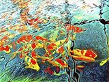 Koi Carp Abstraction