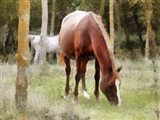 Chestnut Mare Grazing