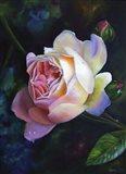 Rose Ghislaine De Feligonde