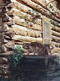 Raccoons, Cabin