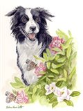 Border Collie With Flowers Butterflies