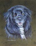 Dog 2 Virgil