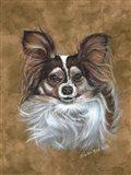 Gizzy Papillion Dog