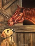 Labrador Retriever And Horse Barn