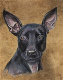 Missy Pitbullmix Dog