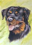 Rotty Dog 1
