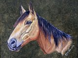 Bam Bam Horse