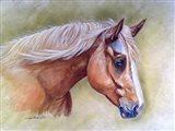 Dakota Horse