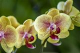 Exotic Orchid 01