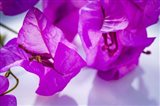 Purple Flower 2