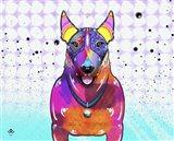 Bull Terrier XI