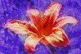 Flower XI