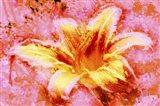 Flower XII