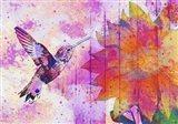 Hummingbird XVII