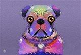 PUG Purple XXXIII
