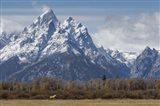 A Horse In Front Of The Grand Teton