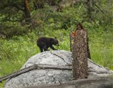 Bear Cub On Rock