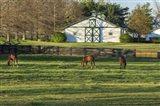 Horse Farm Landscape