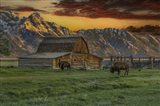 Moulton Barn At Sunrise With Bison