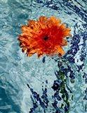 Floating Orange Mum 2