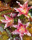 Stargazer Lilies 2