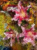 Stargazer Lilies 5