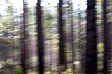 Tree Race