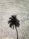 Big Palm