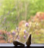 Still Life with Pears and the Magnolia Trees Beyond