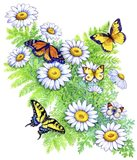 Daisies and Butterflies