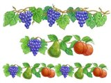 Grapes and Fruit borders
