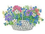 Phlox Basket