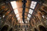 Natural History Museum II
