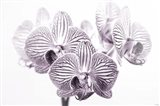 Orchid 1 BW