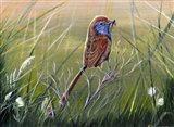 Emu Wren