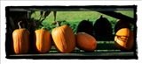 Row Of Pumpkins 2
