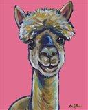 Alpaca Jose Pink