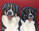 Border Collies 'Buddies'