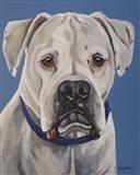 Boxer White