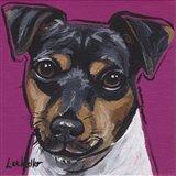 Brazilian Terrier 4